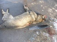 Muž zastrelil v Lučenci psa