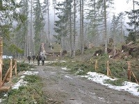 Veterná kalamita zničila takmer 10-tisíc stromov