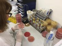 Analýza vzoriek v Národnom referenčnom centre pre salmonelózy na ÚVZ SR.