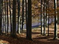 Na snímke bukový les v okolí Morského oka