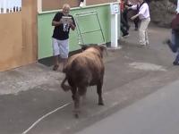 Býk otočil svoj hnev voči divákovi.