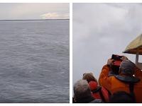 Veľryba všetkých prekvapila
