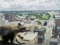 Medvedík vyliezol po budove