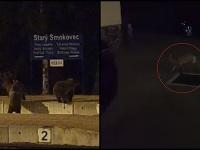 Medvede a líška na vlakovej stanici v Starom Smokovci.