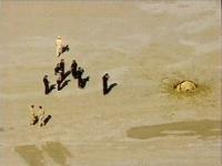 Trosky sondy, ktorá sa zrútila do púšte