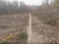 Smutný pohľad na Pečniansky les