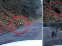 Medveď lovil jeleňa.