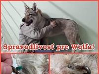 Ďalší týraný pes v košickom útulku zvierat