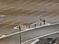 Divé husi útočia na študentov