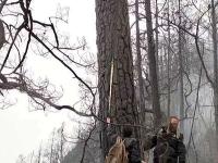 Pri požiaroch zomrelo až 30 ľudí.