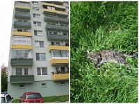 Polícia vyšetruje prípad uhynutej mačky, ktorú niekto vyhodil z bytu z 8. poschodia na sídlisku v Trnave.