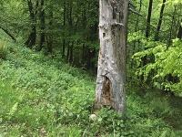 V lese v rekreačnej oblasti Drienica – Lysá objavili časť ľudskej lebky.