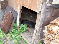 Prípad týrania psa v Novom Meste nad Váhom.