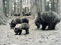Na Hornom Považí bola zaznamenaná medvedia rodinka.