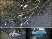 Pri družstve v Turej Lúke unikli do rieky látky z bioplynovej stanice.