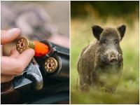 Hlavný veterinárny lekár vyhlásil lov diviačej zveri aj formou zakázaného spôsobu lovu