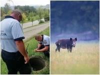 Polícia našla nevládne zviera v šachte