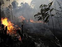 Amazonský dažďový prales postihol požiar