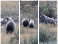 Medvedia rodinka v Javorovej doline.