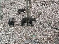 Medvedia rodinka na výlete.