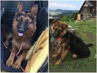 Dvoch psíkov niekto zastrelil a odvliekol do lesa.