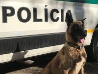 Psy Asia a Cirko úspešne pomáhali pri pátraní