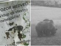 V lokalite Divín sa pohybuje viac medveďov ako inokedy