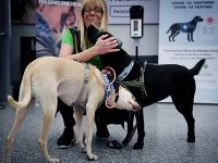 Na letisku v Helsinkách zisťujú prítomnosť koronavírusu vycvičené psy.