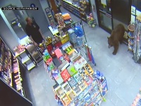 Medveď v obchode pumpy