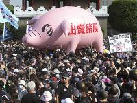 Na snímke demonštranti s obrovským nafukovacím prasaťom so sloganom Zrada chovateľov ošípaných počas protestu v taiwanskej metropole Tchaj-pej