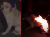 Deti podpálili nič netušiace šteniatko.
