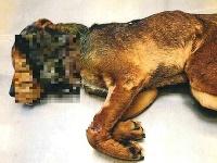 Na smrť utýraný pes v obci Nitra nad Ipľom