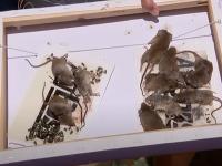 Austrália prežíva myšací mor biblických rozmerov.