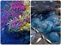 Stredozemné more ovplyvňuje klimatická zmena