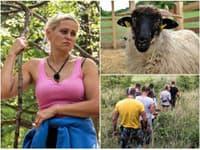 Ovce sa po piatich dňoch našli.