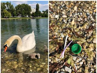 Labuť sa mala zadusiť plastom.