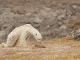 Globálne otepľovanie: VIDEO Srdcervúce