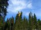Lietadlo pristálo na strome