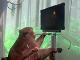 Makak hrá videohry pomocou