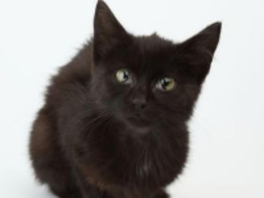 Sexi čierna mačička