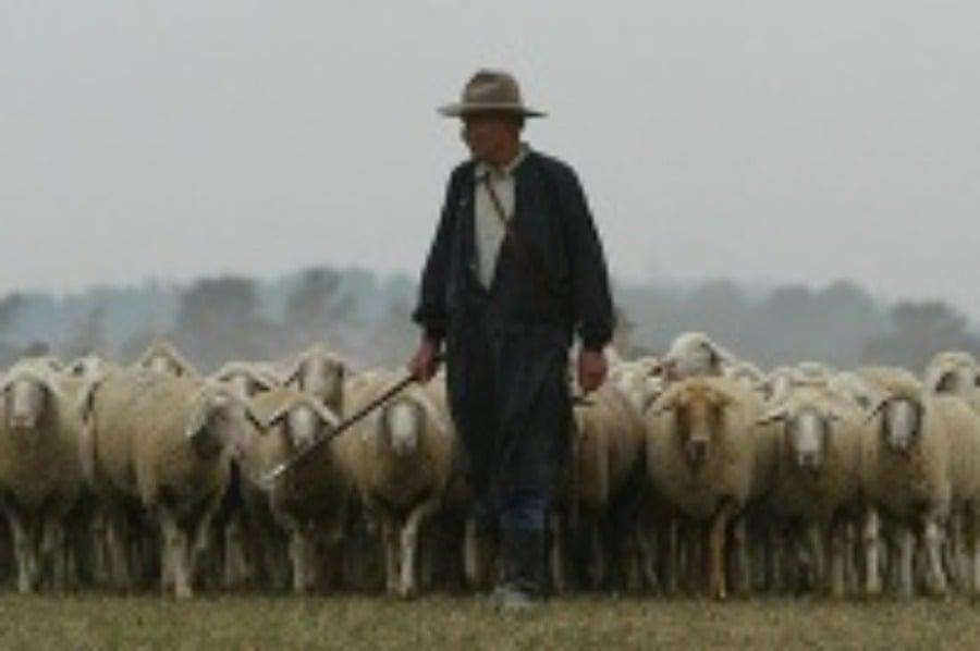 6c30a1511 Zoznam dlžníkov: Pastier oviec visí štátu takmer 11 miliónov ...