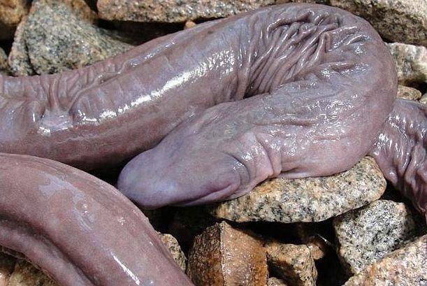 dlhý penis obrázok