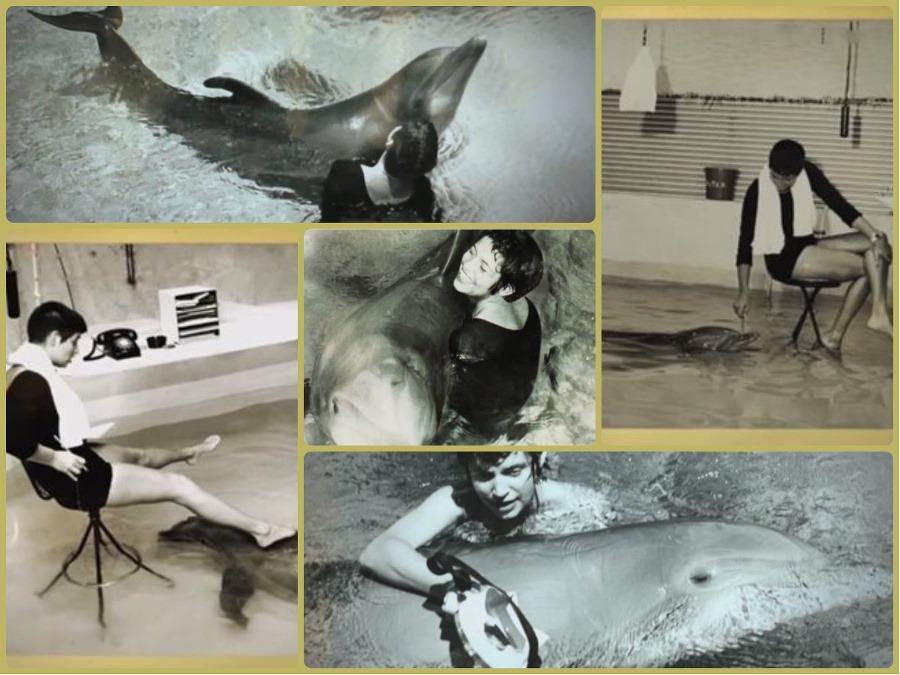 delfín sex videá interracial Paroháč filmy