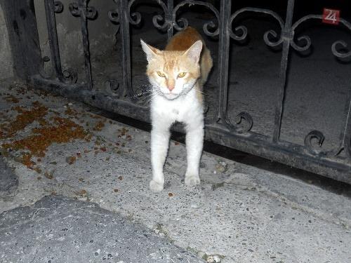 Www mačička galérie com