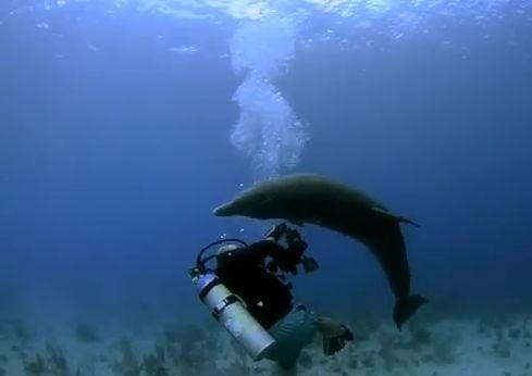 Frustrujúce VIDEO Nadržaný delfín