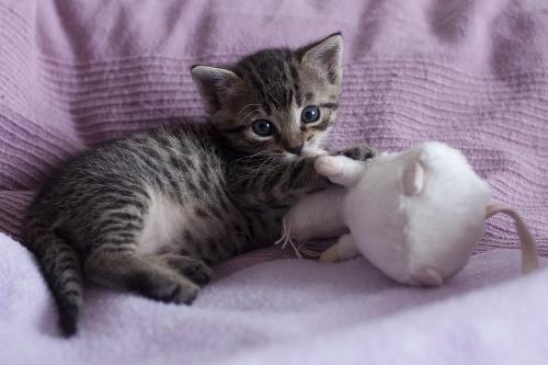 Adoptujzvieratko.sk – prvá celoslovenská