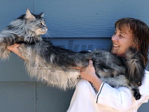 Stewie, najdlhšia mačka sveta