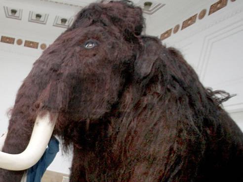 Vedci zistili o mamutoch