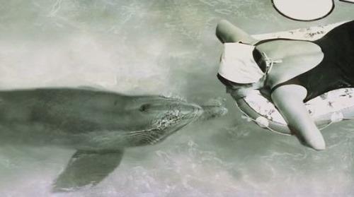 delfín sex videá