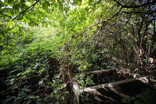 Pohľad na staromestskú záhradu
